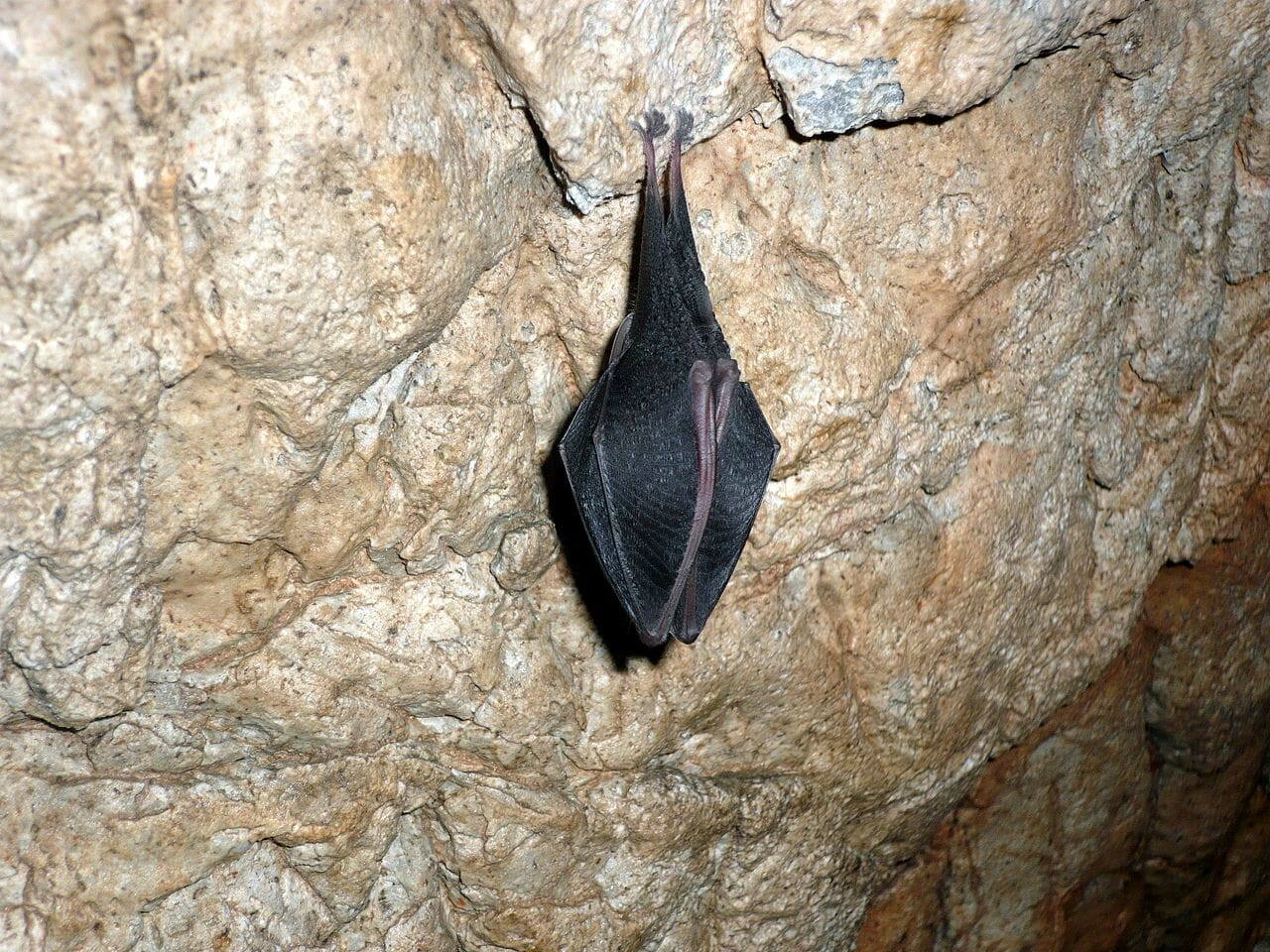 Jeden z mnohých domácich obyvateľov jaskyne Domica
