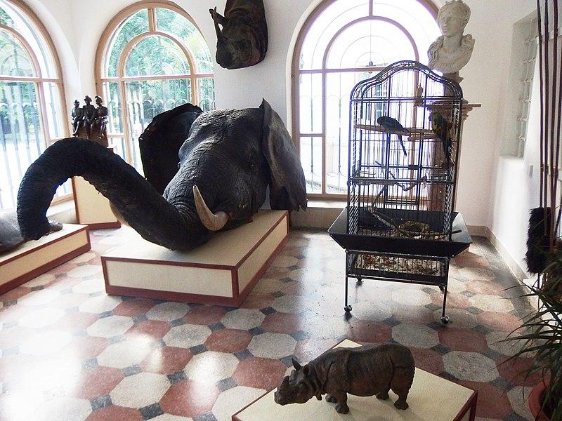 Expozícia exotických trofejí v kaštieli Betliar v zimnej záhrade