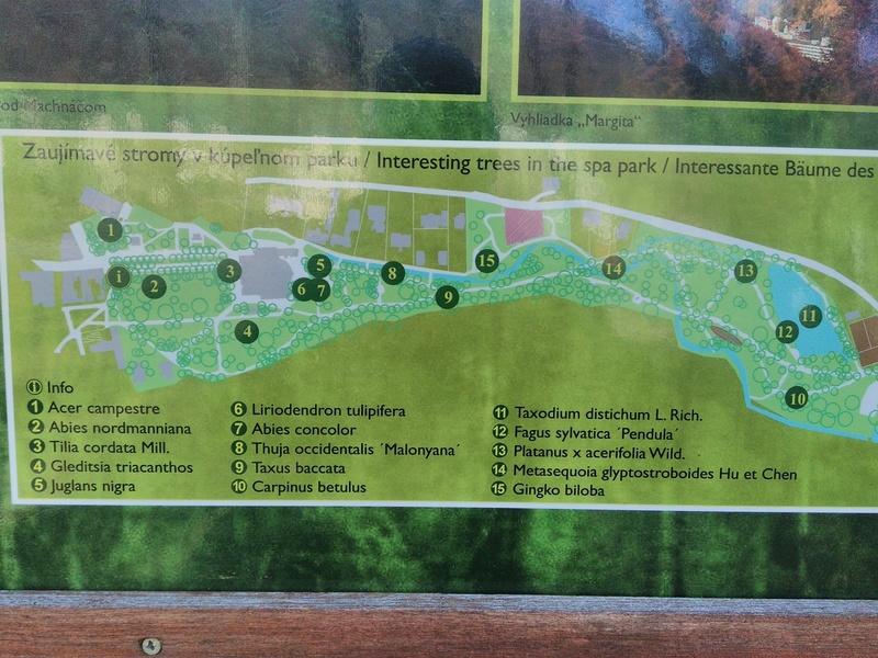 Mapka najvzácnejších stromov v Kúpeľnom parku