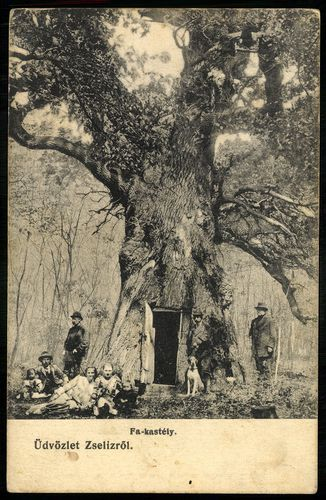 Drevený kaštieľ v útrobách stáročného duba