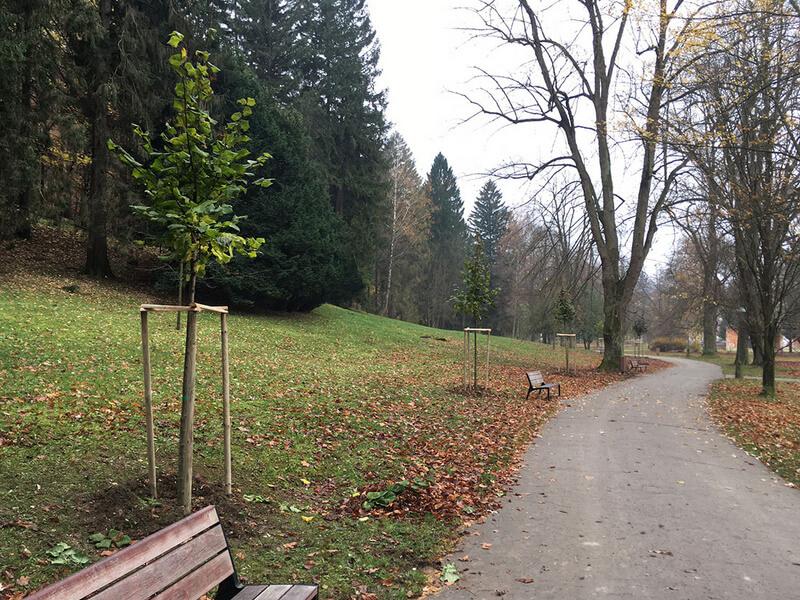 Nové stromové prírastky z roku 2020 v Kúpeľnom parku Trenčianske Teplice