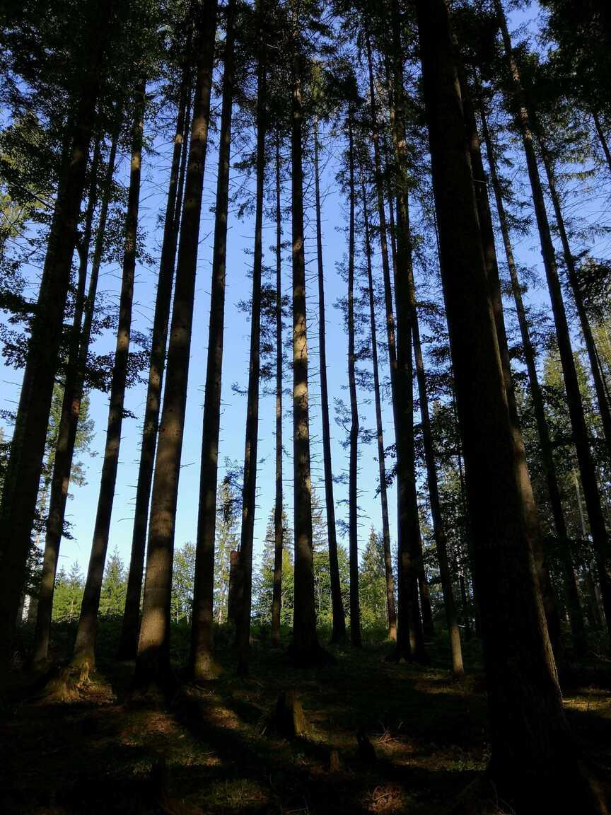 Lesy na Horehroní