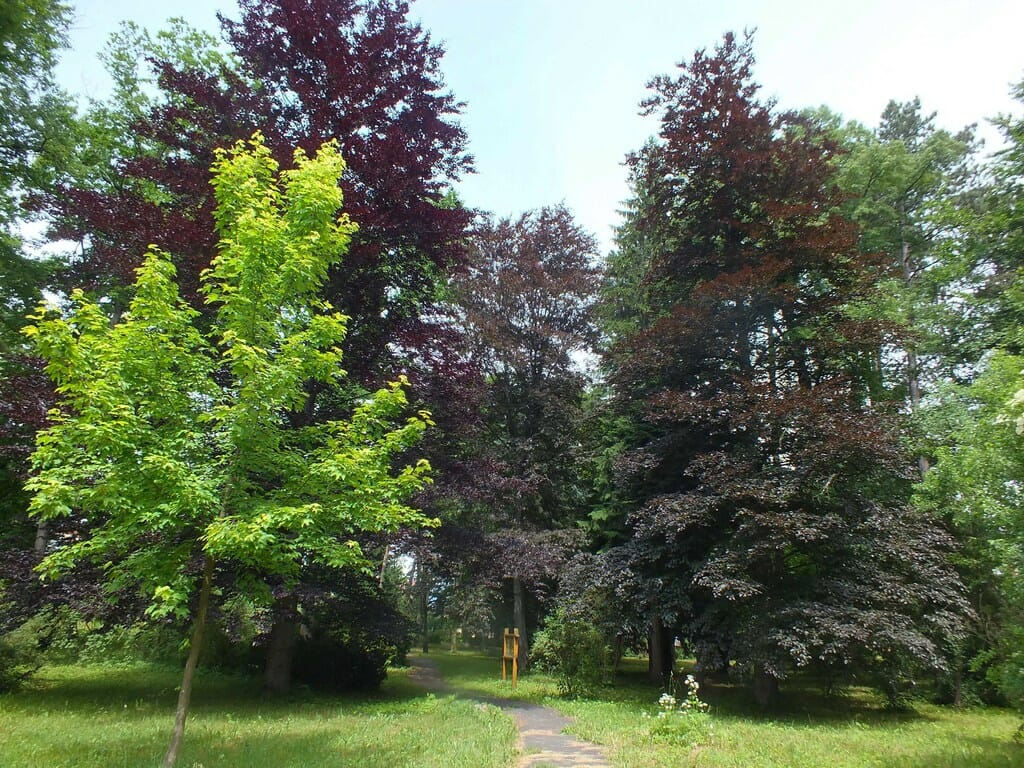 Arborétum plní funkciu prírodného múzea so snahou zachrániť miznúce a vzácne dreviny