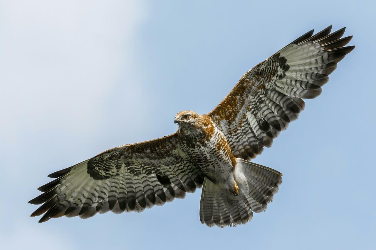 Zabudnuté umenie lovu vám predvedú sokoliari Aquila v Bojniciach.