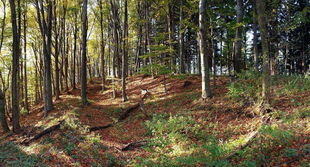 Les v okolí Žakýlskeho hradu