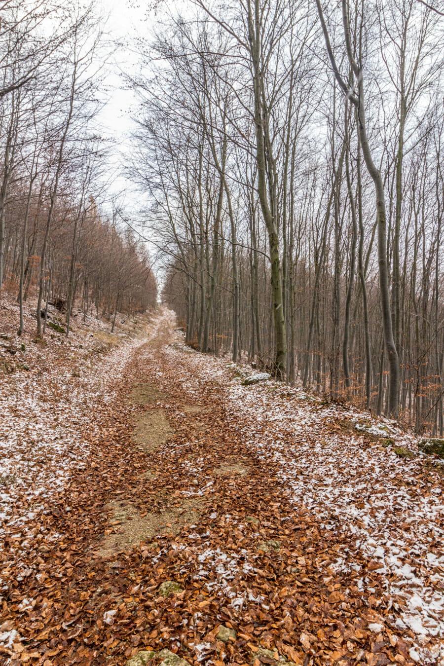 Cesta ku Hájskej skale