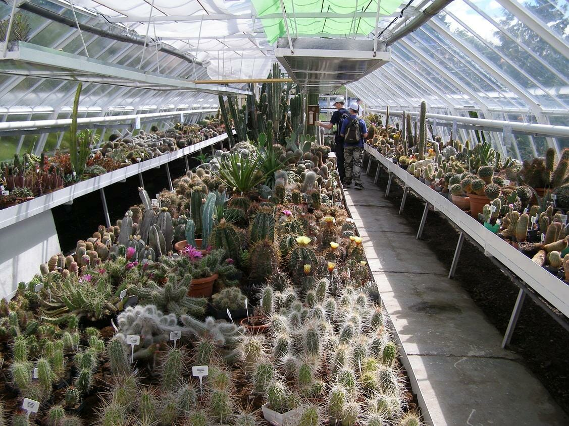 Skleník kaktusov v Arboréte Borová hora