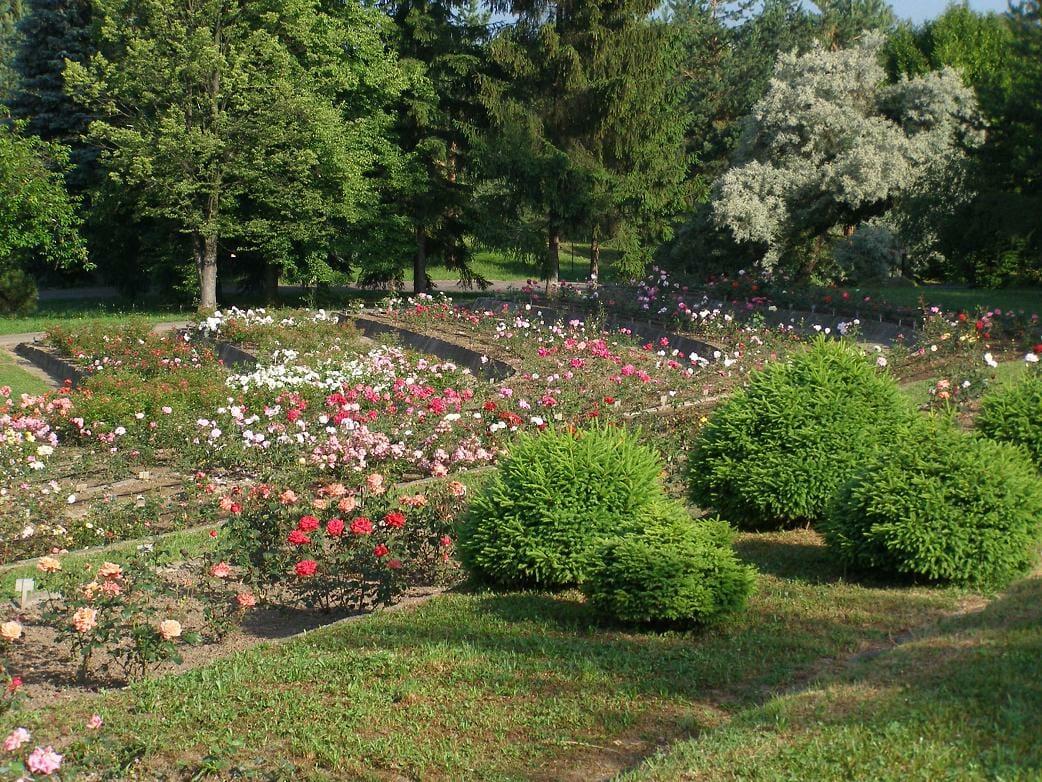 Terasa ruží Arborétum Borová hora