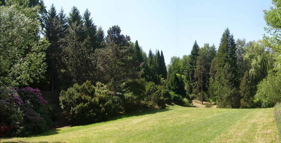 Smreky v Arboréte Borová hora