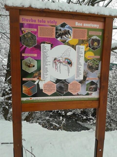 Informačná tabuľa – Stavba tela včely