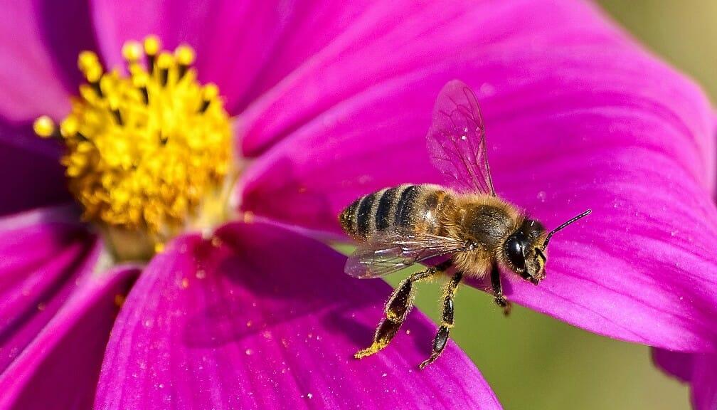 Včelársky náučný chodník