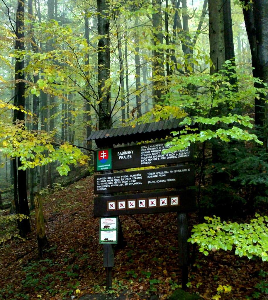 Informačná tabuľa Badínsky prales