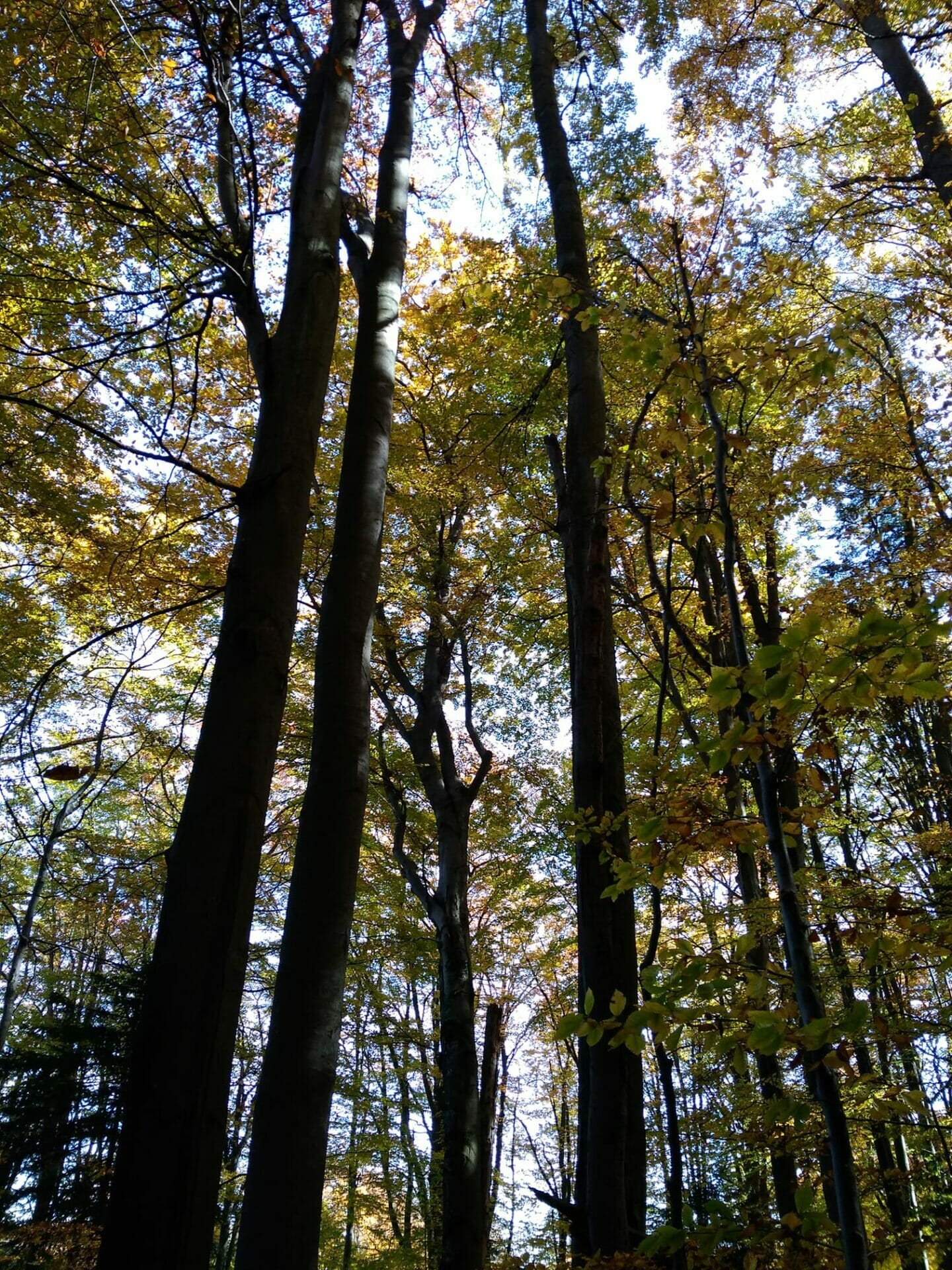 Zeleň Badínskeho pralesa