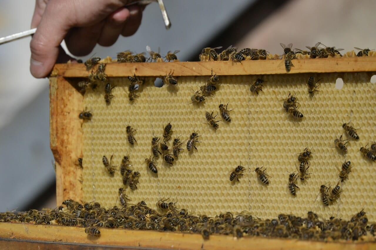 Včelársky rámik